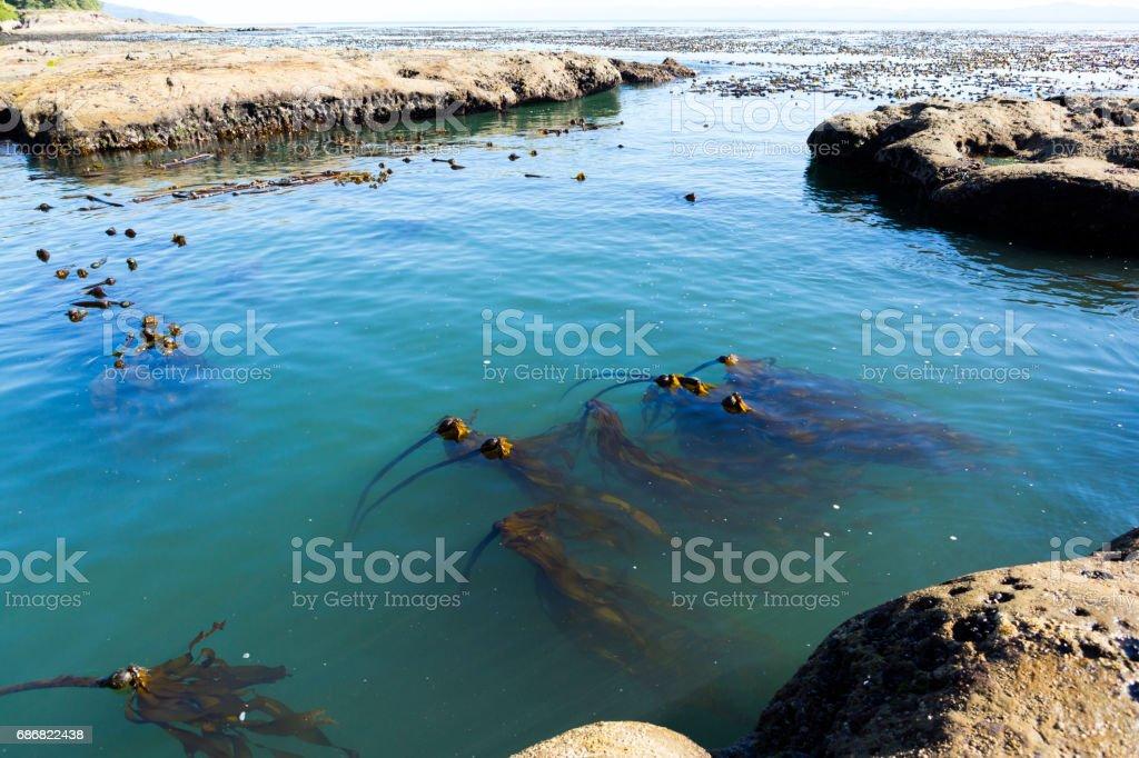 Tidal pools stock photo