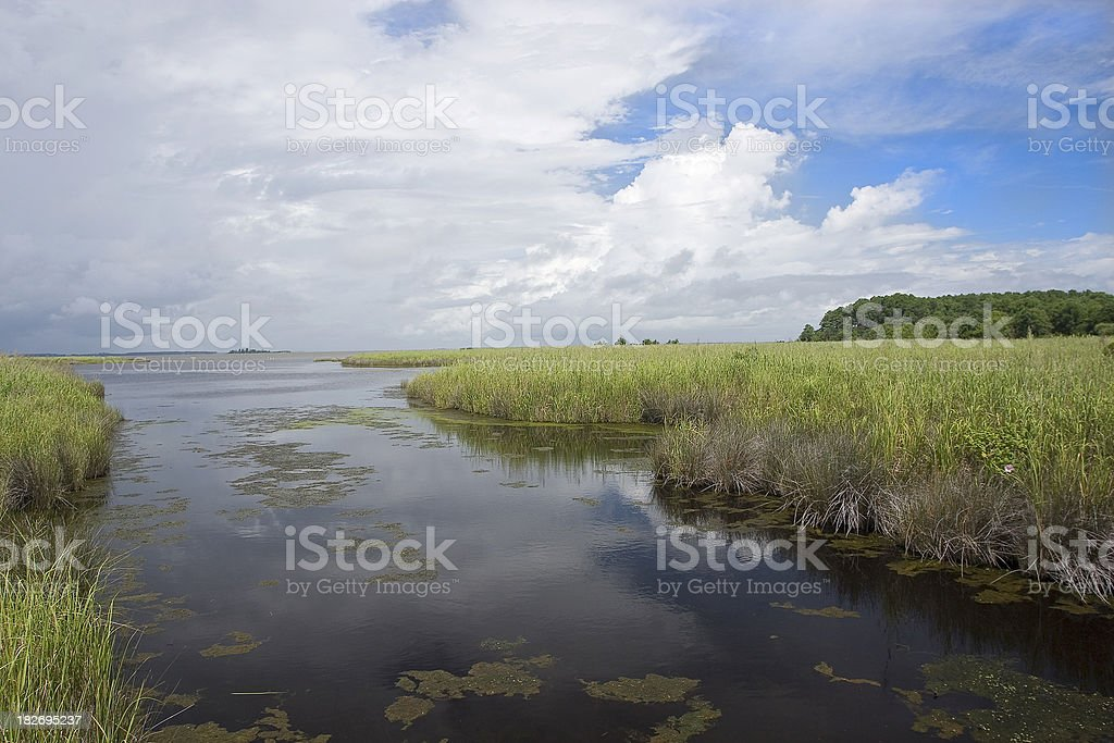 Tidal Salt Marsh royalty-free stock photo