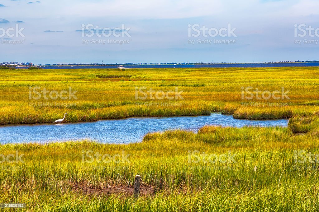 Tidal salt water marsh land in southern New Jersey stock photo