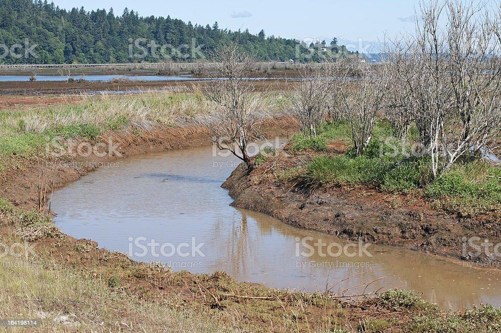 Tidal water flowing in restored estuary stock photo