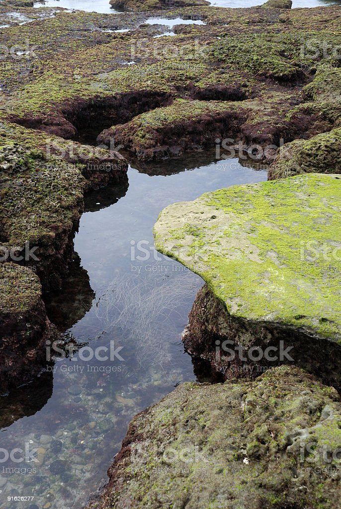 Tide Pool royalty-free stock photo