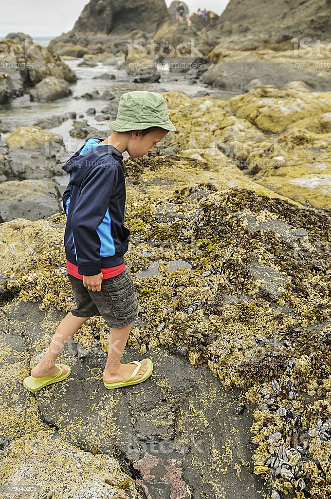 Tide Pool Sea Creatures royalty-free stock photo