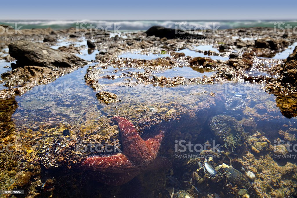 Tide Pool Teeming With Life stock photo