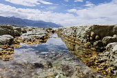 Tidepool with Sea Life in Kaikoura, New Zealand