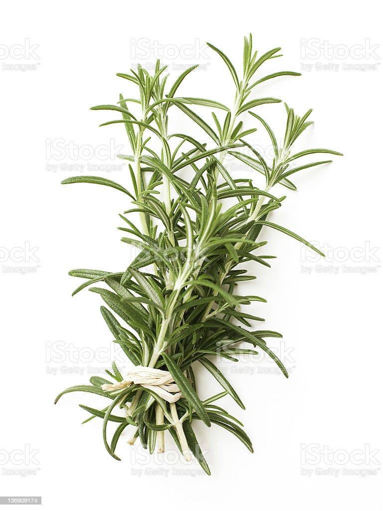 tied twigs of rosemary stock photo