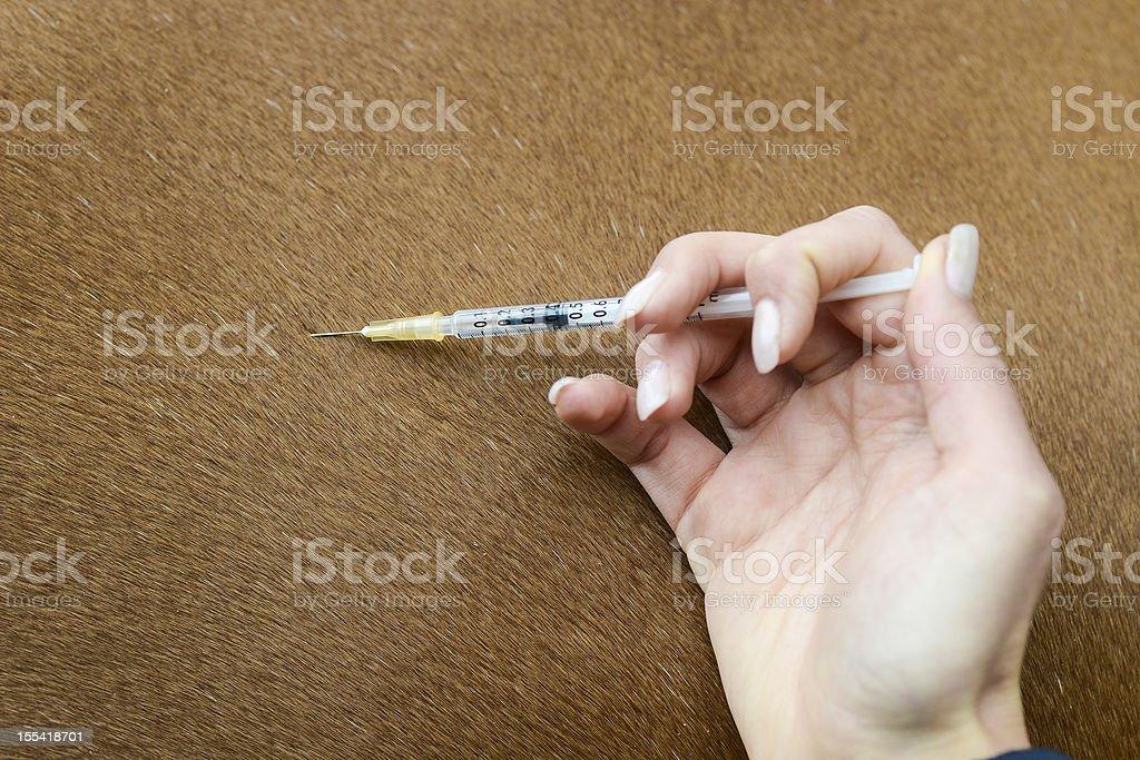 Tierarzt mit Spritze stock photo