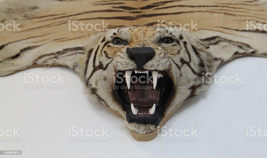Tiger Animal. stock photo