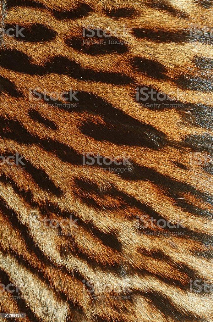 tiger fur background stock photo