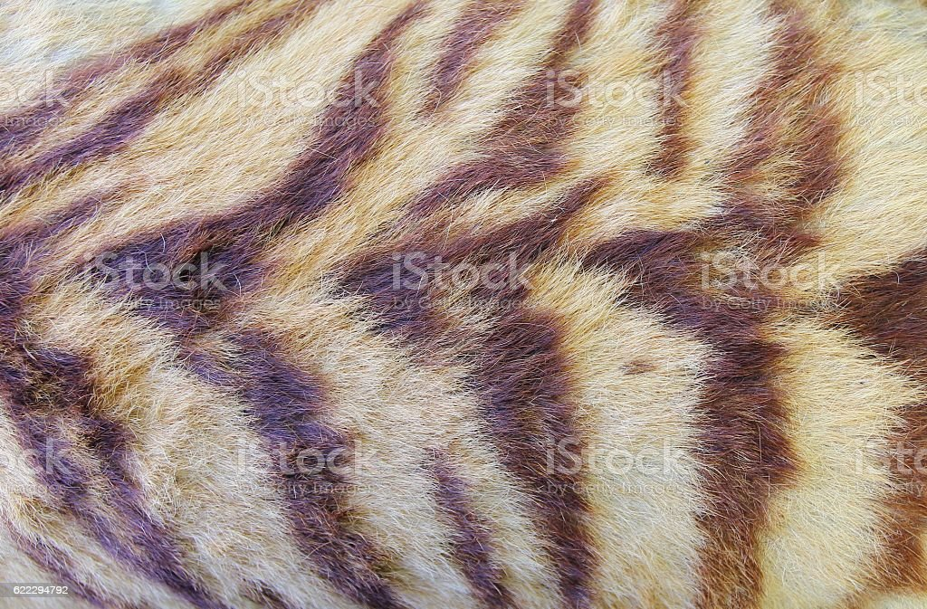 Tiger fur background stock photo