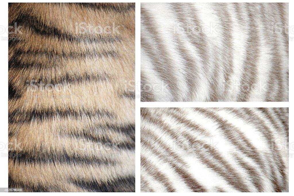 tiger fur pattern stock photo