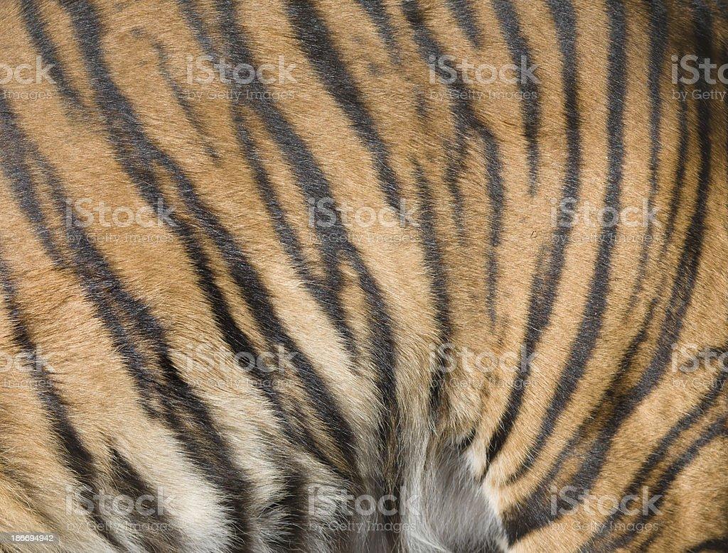 Tiger fur pattern stripes orange and black royalty-free stock photo