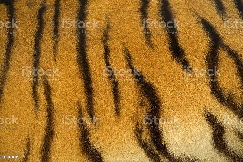tiger fur texture royalty-free stock photo