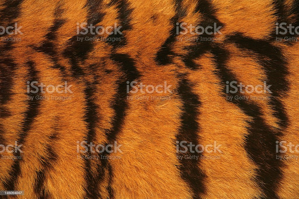 tiger fur texture royalty-free stock photo