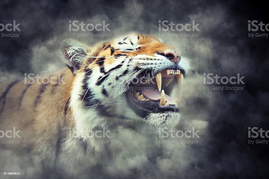 Tiger in smoke stock photo