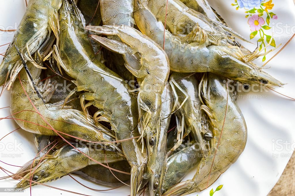 Tiger prawn stock photo