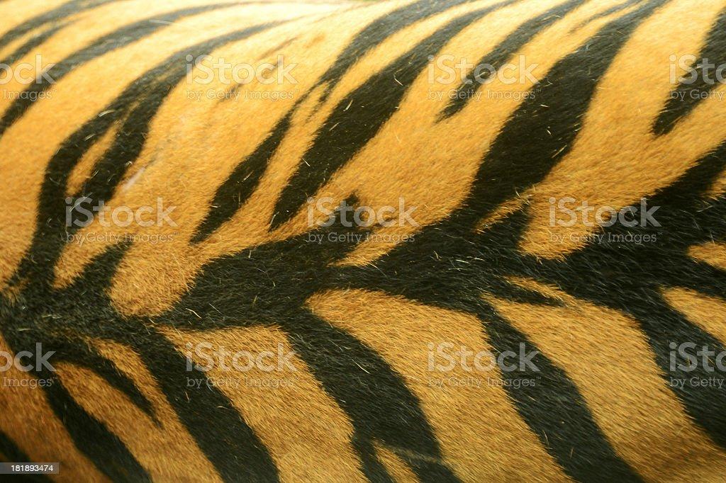Tiger Print stock photo