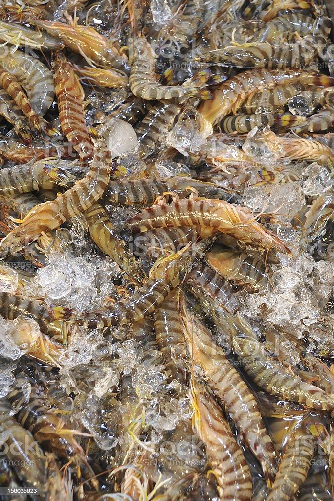 tiger shrimps stock photo