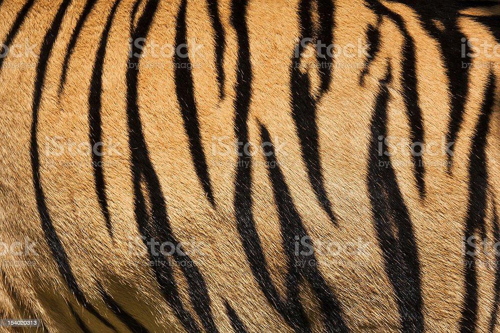 Tiger skin stock photo