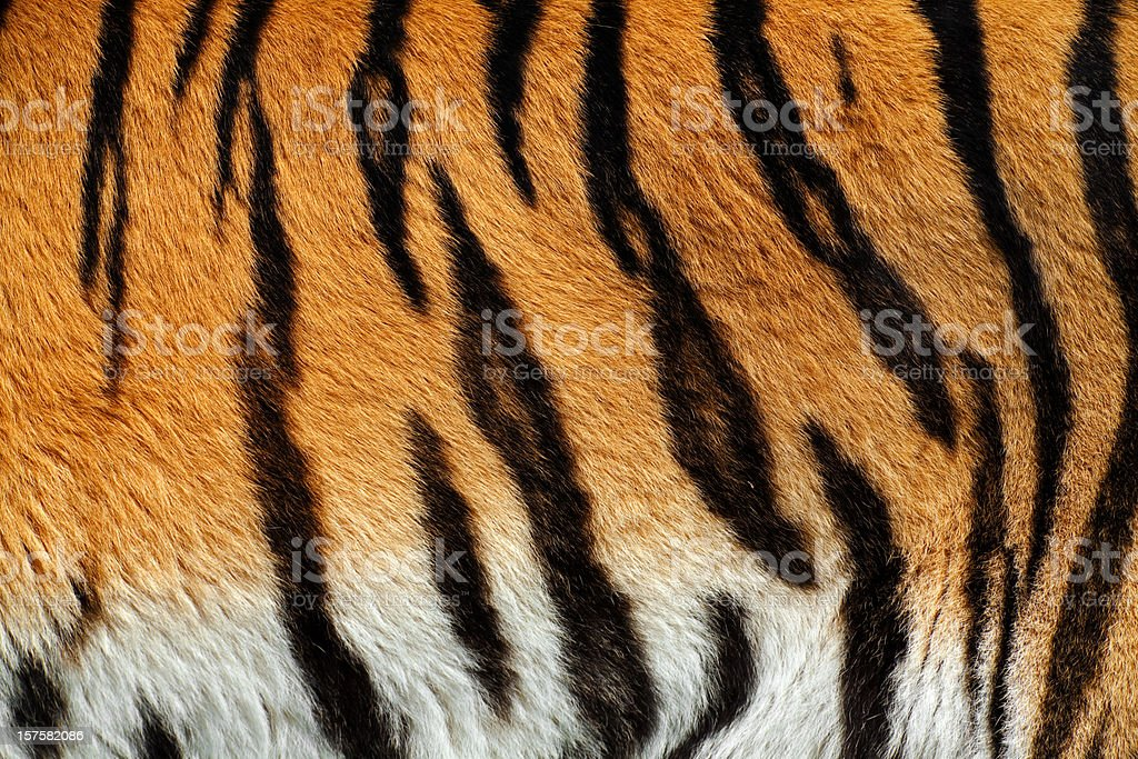 Tiger Skin XXXL stock photo