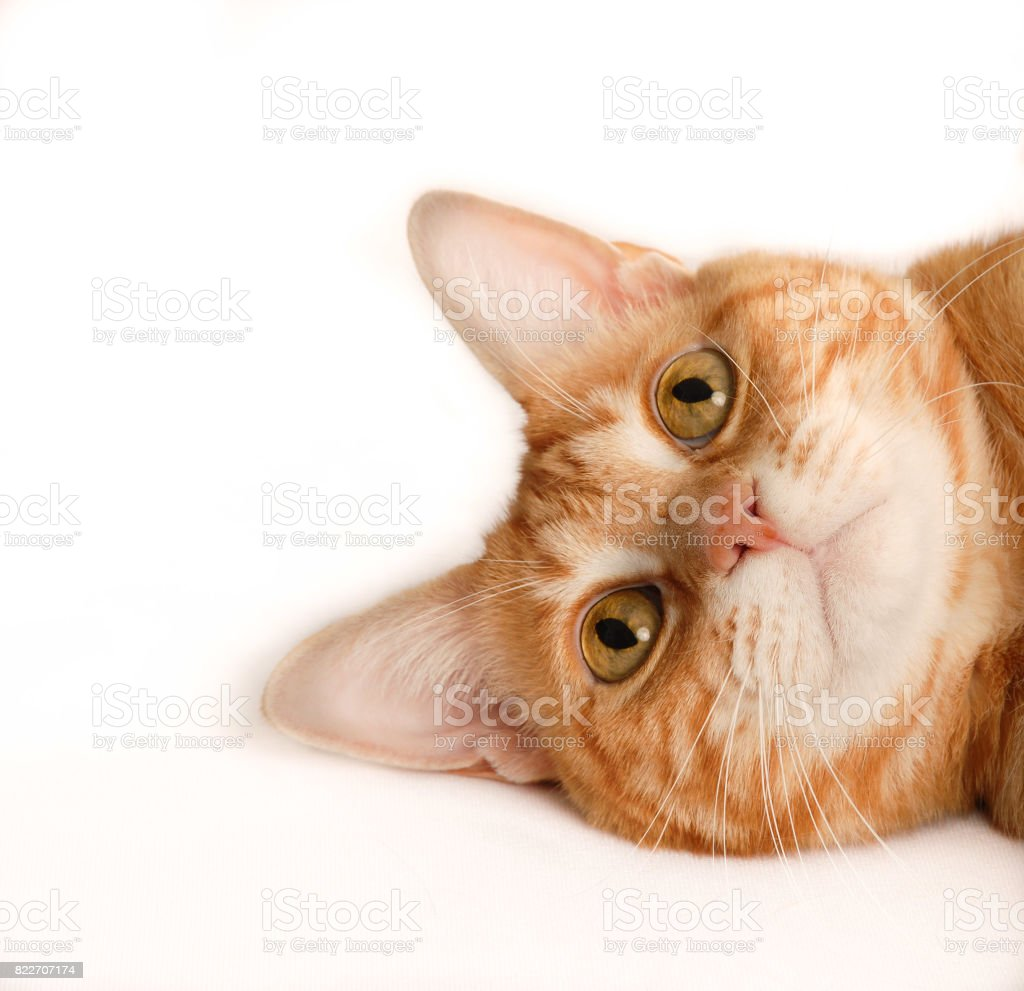 Tiger Striped Cat Sideways Headshot stock photo