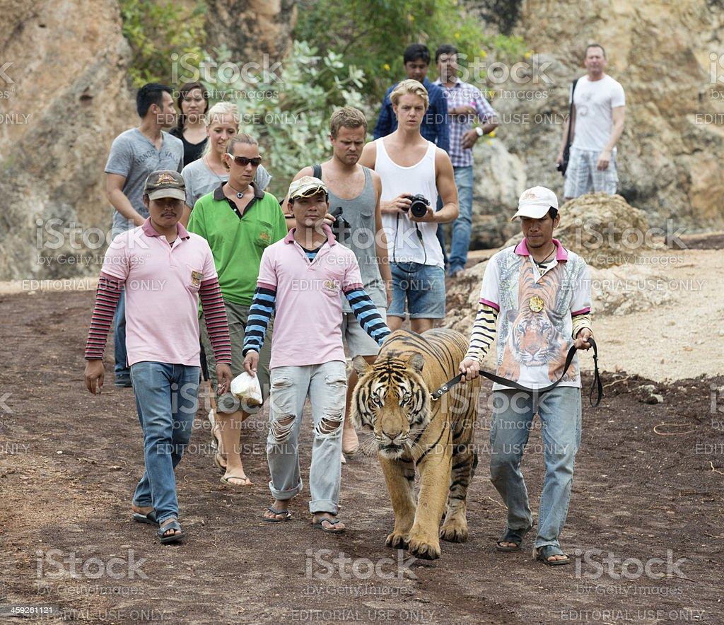 Tiger Temple, Kanchanaburi, Thailand stock photo