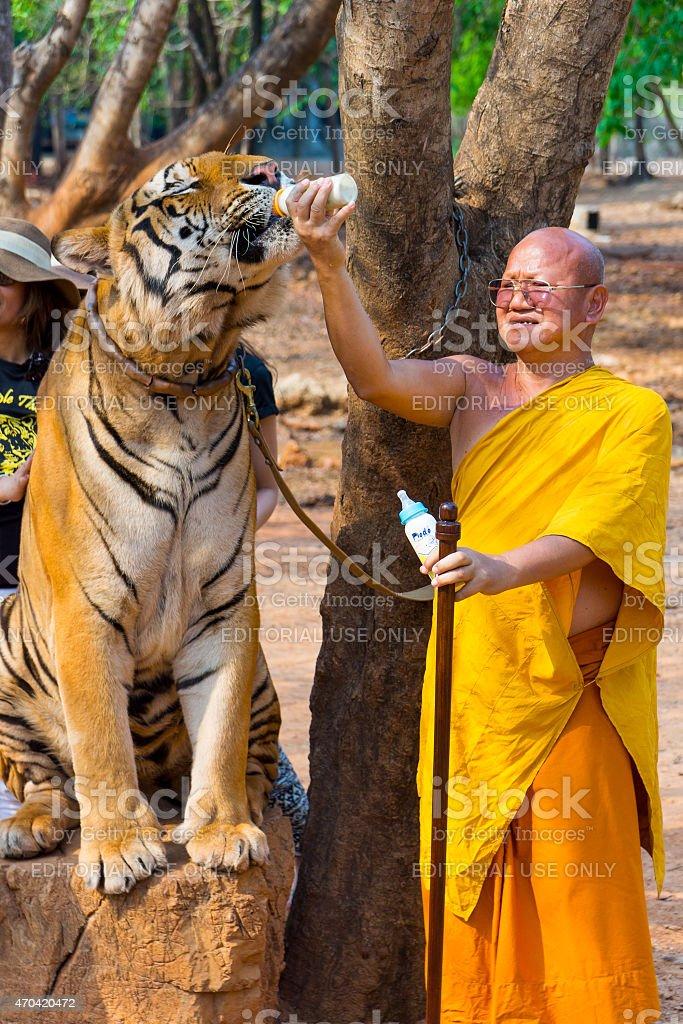 Tiger Temple, Thailand stock photo