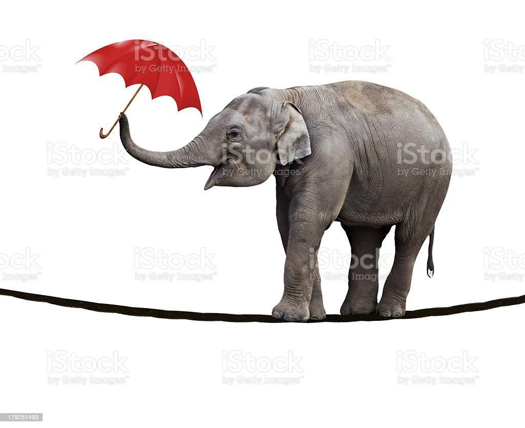 Tightrope walking elephant stock photo
