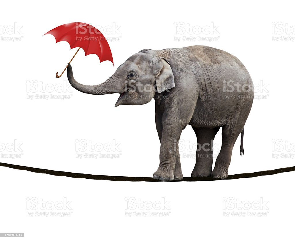 Tightrope walking elephant stock photo