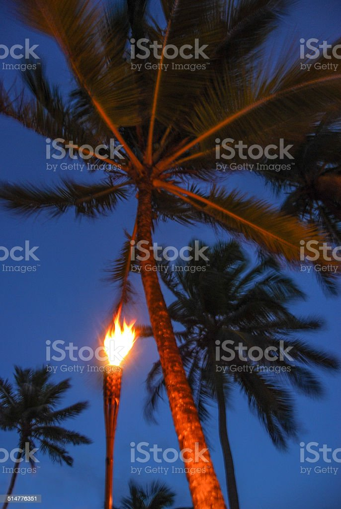 Tiki Torch Palm stock photo
