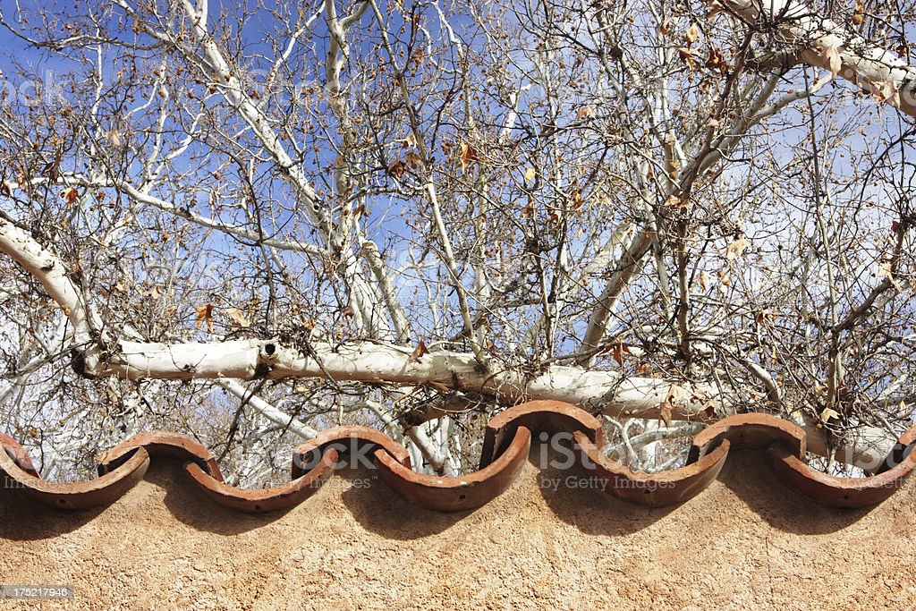 Tile Roof Stucco Sycamore Trees stock photo