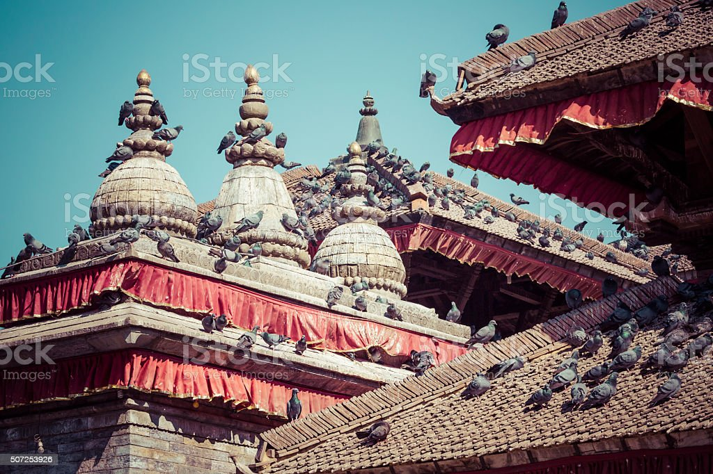 Tile roofs with many birds stock photo