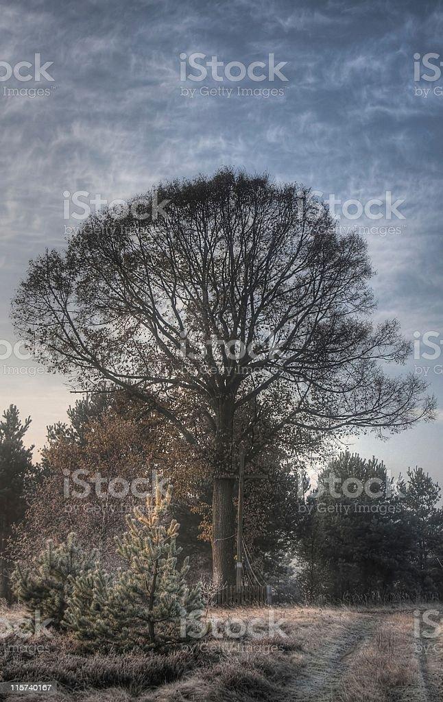 Tilia tree and cross royalty-free stock photo