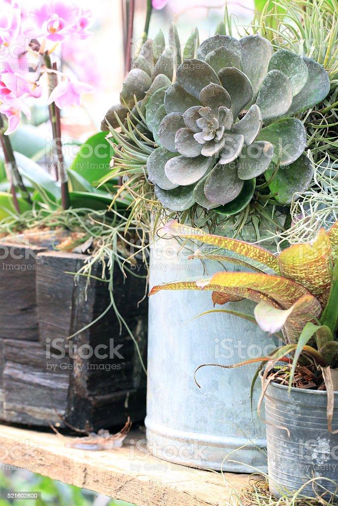 Tillandsia and cactus stock photo