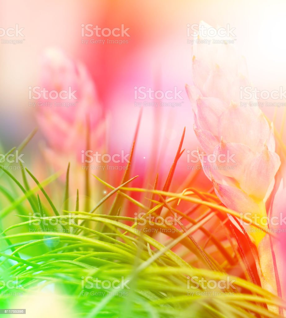 Tillandsia in the market flower stock photo