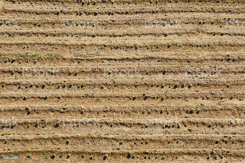 Tilled field and crop beside Euphrates in Tell Salhiye, Syria stock photo