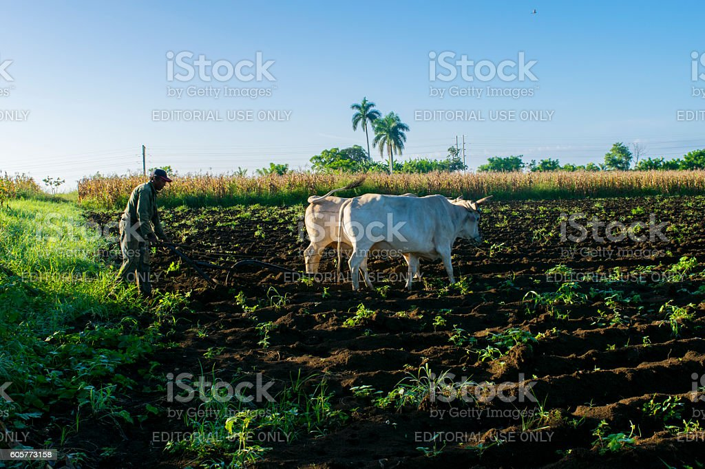 Tilling the land stock photo