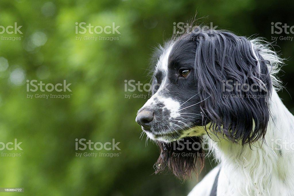 Tilly stock photo