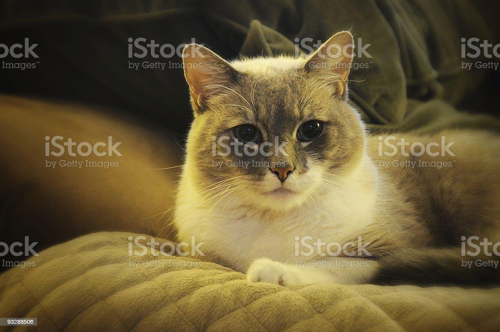 Tilt Shift Cat stock photo