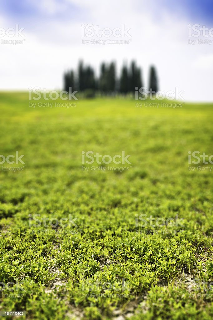 Tilt Shift Effect on Tuscan Country, Val d'Orcia in Italy stock photo