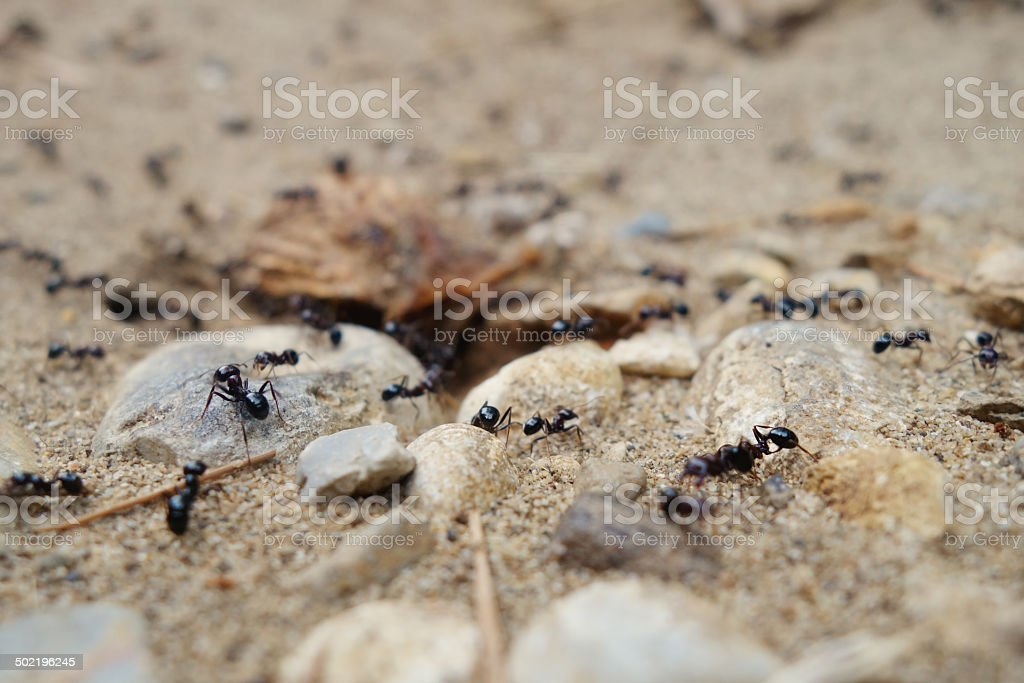 Tilt shift entrance to the ant's nest. royalty-free stock photo