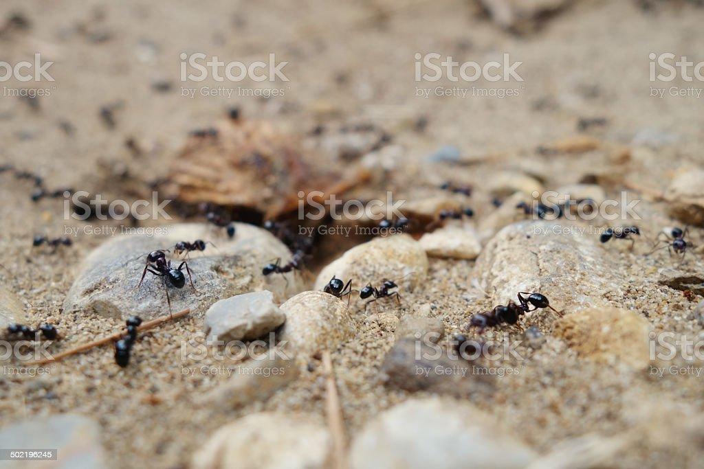 Tilt shift entrance to the ant's nest. stock photo