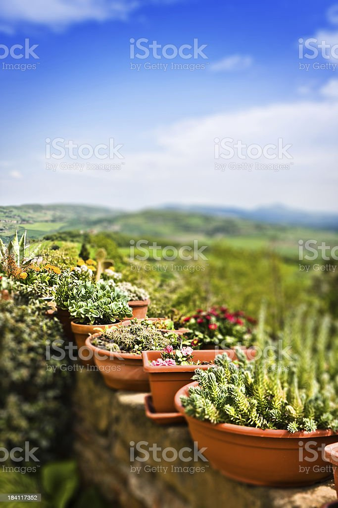 Tilt Shift Potted Plants upon Tuscan Landscape, Italy stock photo