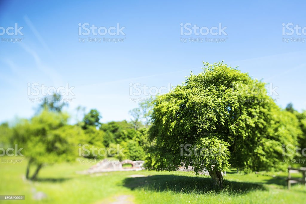 Tiltshift image of newly sprung tree in summer light (XXXLarge) royalty-free stock photo