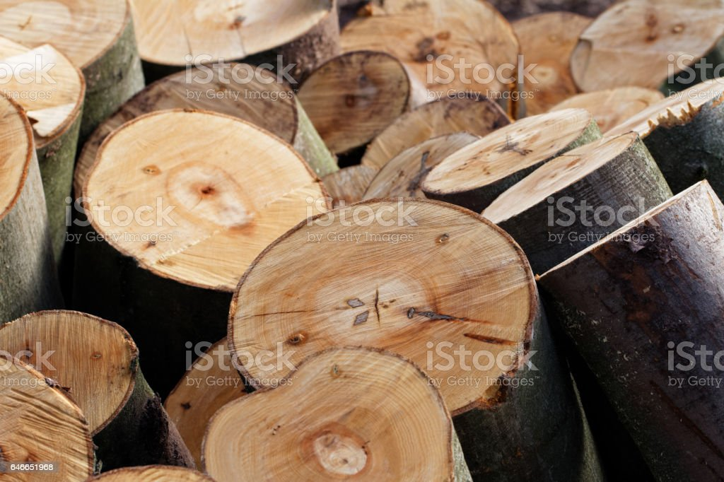 Timber Harvesting: Pile of Freshly Cut Beech Tree Sections – Foto