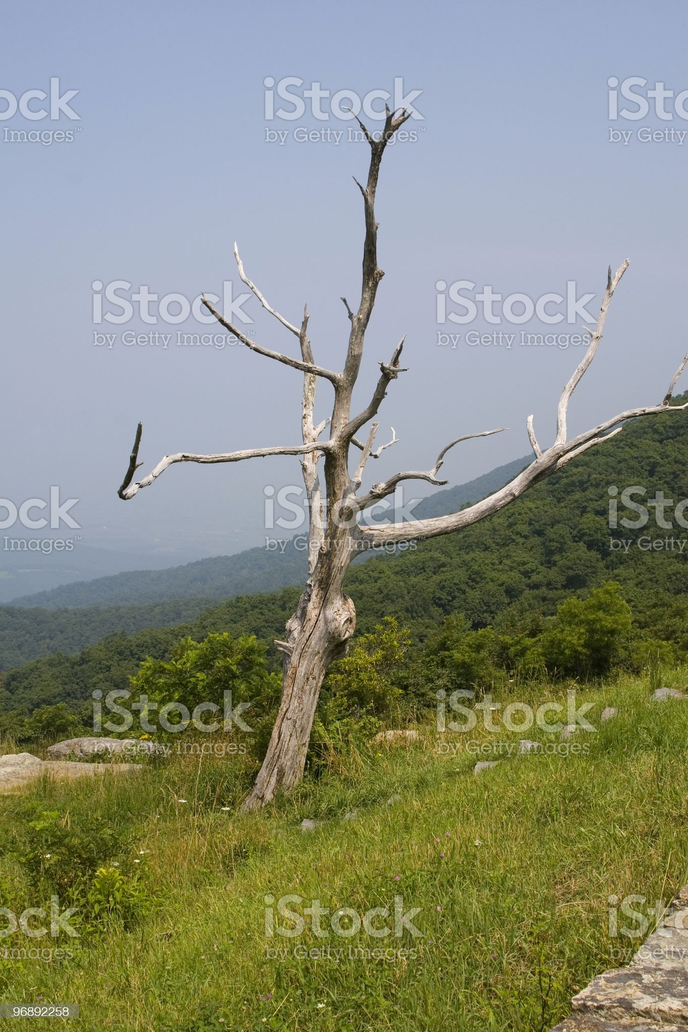 Timber hollow overlook, Skyline drive, Shenandoah national park royalty-free stock photo