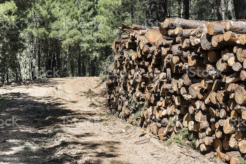 Timber industry royalty-free stock photo