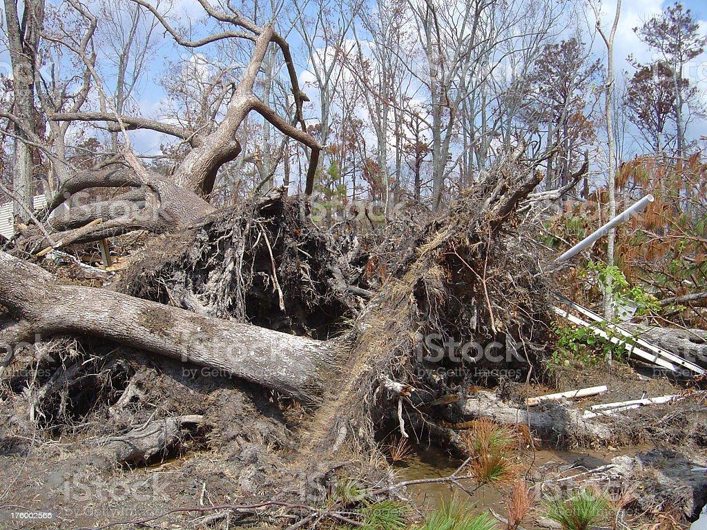 Timber Katrina stock photo
