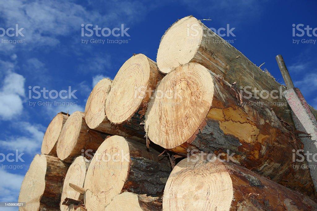 Timber Logs stock photo