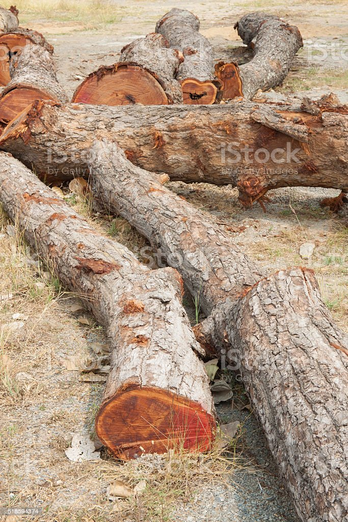 Timber on ground royalty-free stock photo