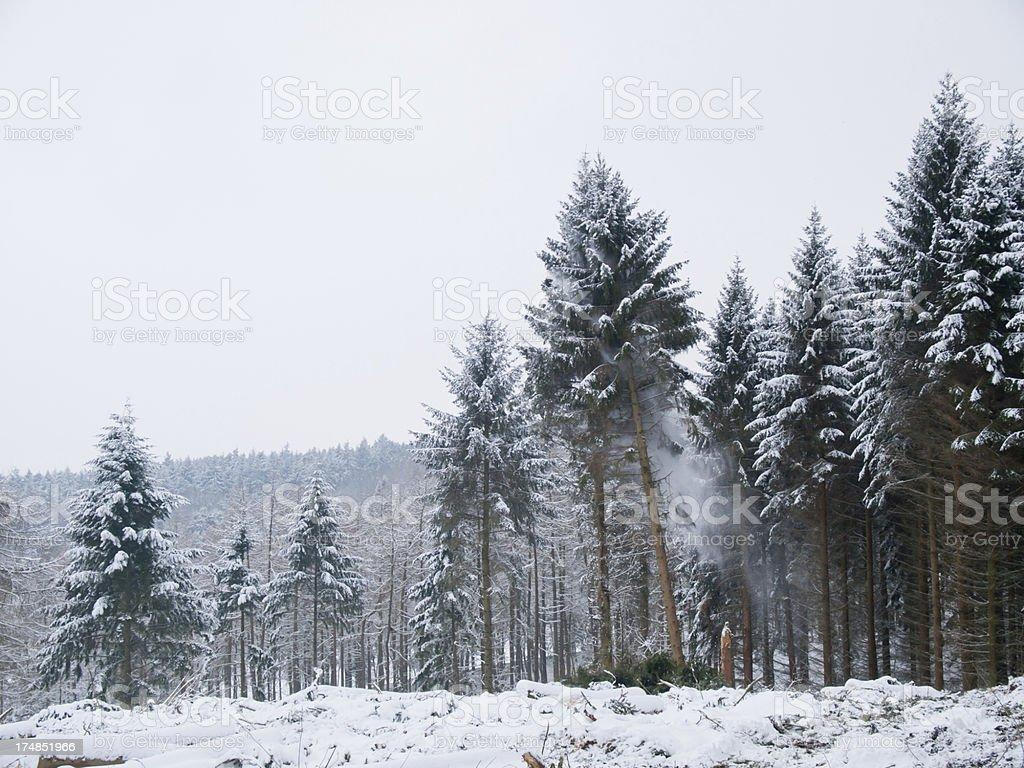 Timber ! royalty-free stock photo